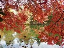 雲場池の紅葉(車で8分)
