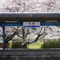 竹野駅の桜