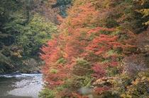 紅葉の鳥谷橋