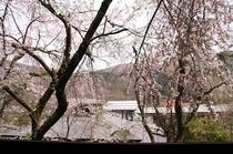 三宝の湯廊下の休憩スペースからの桜