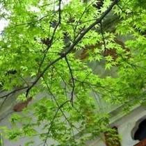 玄関にあふれる緑