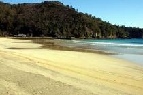 冬モギ砂浜
