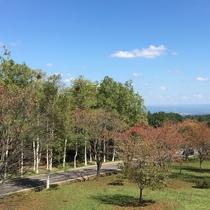 岩手県民の森の桜の木(2016年9月21日撮影)