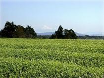 牧之原お茶畑