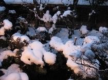 冬の日本庭園