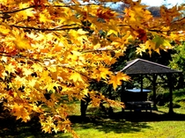 渓風園の紅葉