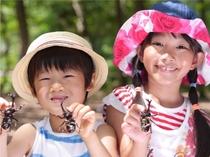 【夏イベント・かぶと虫採集体験】