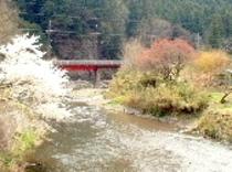 直下の春の高麗川と桜