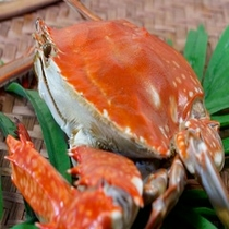 渡り蟹は「朱紅の宝石」
