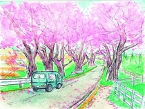 旧4号線の桜並木