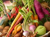 無農薬の有機野菜