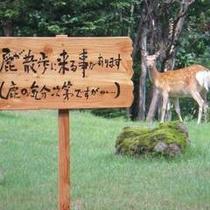 ホテルの近くまで鹿が訪れることもあります