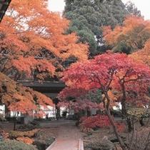 ■啄木亭の日本庭園(秋)