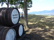 マリコヴィンヤード 高級ワイン用葡萄畑