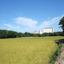 自信があります。地元無農薬の艶のある米
