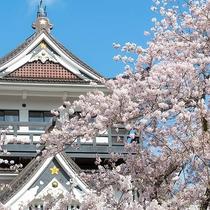 【春】横手の桜まつりは4月下旬頃~。横手公園は天守閣と桜が見られるお花見名所!