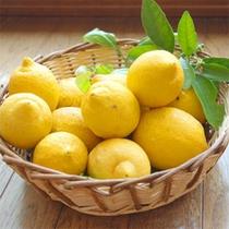 自家栽培レモン