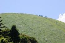 伊豆高原観光スポット大室山。