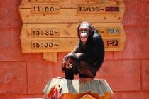 伊豆シャボテン公園のチンパンジー!