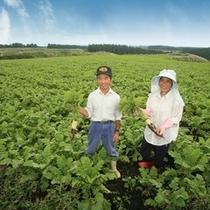 大根畑で阿蘇の風景に溶けこむ、井さんご夫婦