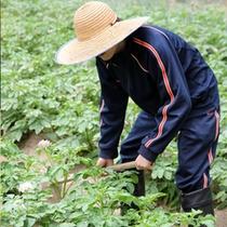 自家製野菜収穫