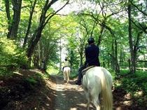 森林の中をお馬さんとトレッキング