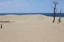 観光地 鳥取砂丘