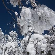 『冬の裏磐梯』 樹氷の西大巓