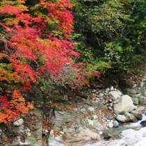 園原の清流と紅葉