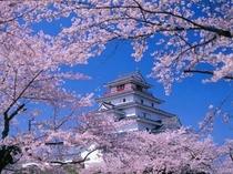 桜花爛漫の会津鶴ヶ城