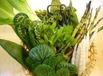 春の味覚 山菜