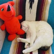 看板猫「雪乃介」です。