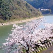 春の鹿野川湖