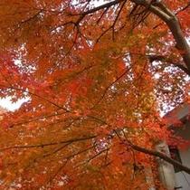 紅葉(11月上旬〜中旬)