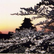 鶴ヶ城は桜の名所100選のひとつ