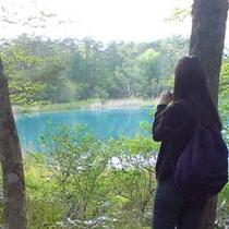 【裏磐梯五色沼】裏磐梯には大小200以上の湖や沼があります。(当館より車で約60分)