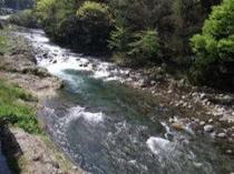 狩野川がまじかに、5月22日より鮎釣が解禁になります
