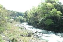 狩野川の清流