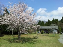 母屋全景・桜の頃
