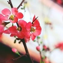 ロビーや廊下には、女将が活けたお花を飾っています。