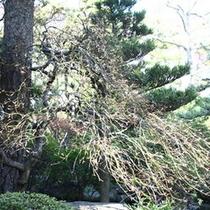 庭園の樹〜春〜