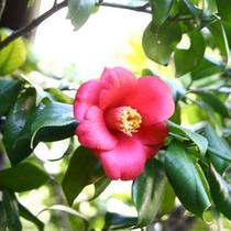 庭園の花〜春〜