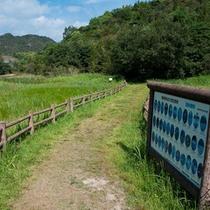 湿地草(休暇村入り口)