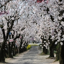 休暇村近くのひょうたん池の桜の風景