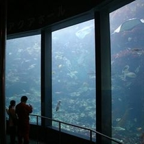 水族館水槽