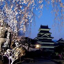 *松本城夜桜会