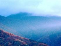 朝靄と紅葉
