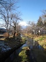 富士山と桂川と桜並木2
