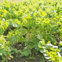 【自社農園】色んな野菜を育ててます♪