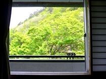 お部屋からの眺め/新緑